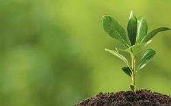 Các nhà khoa học tìm ra cách tái thiết lại thực vật tự nhiên để chống biến đổi khí hậu