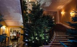 Ngắm nhìn cây thông Noel có một không hai được thiết kế bởi chính tay Jony Ive