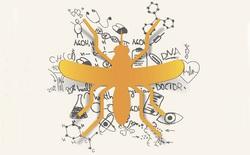Phương pháp ngăn chặn Virus Zika: Dùng muỗi diệt muỗi