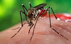 Phát hiện động trời: Nam giới nhiễm virus Zika có nguy cơ bị teo tinh hoàn tới 90%