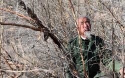 Cuộc chiến 20 năm giữa người và cát: Câu chuyện thần kỳ của lão nông 76 tuổi