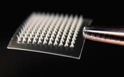 Nghiên cứu mới ra miếng dán có thể làm tan mỡ thừa dưới da, thử nghiệm thành công mỹ mãn trên chuột