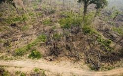 Đáng báo động, rừng nhiệt đới đang phát thải nhiều khí carbonic hơn cả oxy