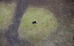 Mỹ: bão đi qua, bò ở lại