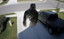 Tại sao con chim này không vỗ cánh mà vẫn bay được? Không phải ma thuật đâu nhé