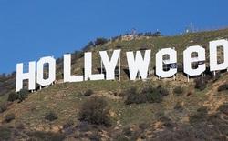 """Chỉ sau một đêm, tấm biển Hollywood đã biến thành """"Hollyweed"""" trước sự ngỡ ngàng của người dân"""