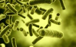 Mã gene của vi khuẩn E.coli bất ngờ nắm giữ chìa khóa đến phương thuốc trường sinh cho con người