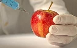Tháng tới, những quả táo biến đổi gen đầu tiên, không bị hóa nâu sẽ được bán ra tại Mỹ