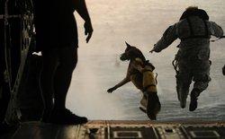 Đây là cách mà đặc nhiệm SEAL rèn luyện sự bền bỉ và bạn hoàn toàn có thể học hỏi họ