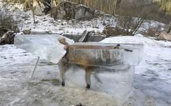 Con cáo ngã xuống sông đóng băng thành cục, được trưng bày để thấy mùa đông khắc nghiệt như thế nào
