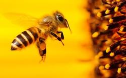 Khám phá mới về não ong có thể giúp máy ảnh của bạn chụp đẹp hơn