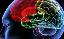 Người thường xuyên rơi vào cảnh tắc nghẽn giao thông có tỷ lệ mắc bệnh mất trí nhớ cao hơn bình thường