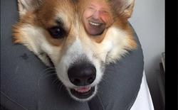 """Sử dụng FaceApp cho chó và nhận được những thay đổi """"dựng tóc gáy"""""""