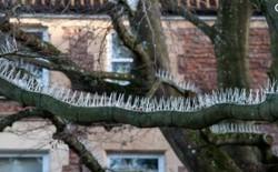 """Tầng lớp đại gia tại Bristol thiết lập hàng rào gai trên cây để ngăn không cho chim """"bĩnh"""" xuống xe của họ"""