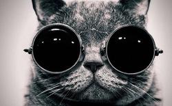 CIA đã từng biến mèo thành những siêu điệp viên như trong phim của Hollywood