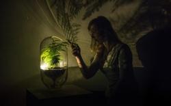 Ý tưởng độc đáo biến cây xanh trở thành đèn thắp sáng trong đêm