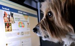 """Tại sao bạn nên """"detox"""" Facebook trong 7 ngày Tết, bài viết này sẽ tiết lộ lý do"""
