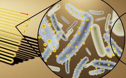 Pin mặt trời có thể quang hợp gấp 40 lần thực vật, nhờ vào vi khuẩn cyborg