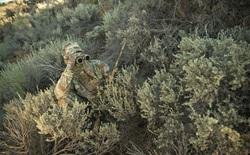 Đố bạn tìm thấy những tay lính bắn tỉa trong loạt ảnh này?