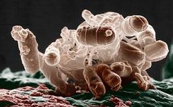 """Các nhà khoa học vừa tạo ra một dạng sự sống """"ngoài hành tinh"""", liệu điều đó có đáng sợ?"""