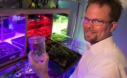"""Nhà khoa học này muốn """"chơi xổ số"""" với hàng nghìn tỷ DNA để tìm ra loại kháng sinh mới"""