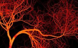 Đại học California phát triển thành công hệ thống mạch máu chế tạo bằng cách in 3D