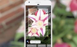[Google I/O 2017] Google Lens sẽ giúp camera điện thoại của bạn hiểu về vật thể còn rõ hơn bạn