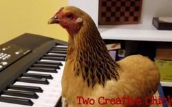 Bạn sẽ ngạc nhiên tột độ khi xem cô gà gốc Trung Quốc, tên Hàn Quốc, quốc tịch Mỹ này chơi piano thành thục vô cùng