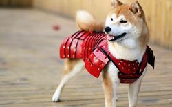 [Vui] Thú cưng nhà bạn sẽ cool-ngầu và đẹp trai hơn bao giờ hết trong những bộ giáp Samurai này