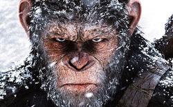 War for the Planet of the Apes: Hình ảnh mãn nhãn, nội dung sâu sắc, được giới phê bình đánh giá cực cao