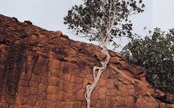 """[Vui] Nhìn khả năng sinh tồn mãnh liệt của cây cối để """"thôi kêu ca và tiếp tục cố gắng"""""""