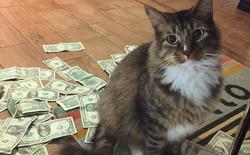 Chú mèo này sẽ giật tiền của bạn, mang đi làm từ thiện