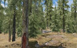 Modder ghép cây ngoài đời thực vào trong game Skyrim, kết quả vô cùng ấn tượng