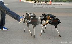 Công ty công nghệ Trung Quốc ra mắt chó robot vận chuyển, khẳng định không phải hàng nhái
