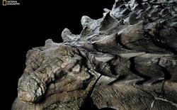 """Phát hiện một hóa thạch khủng long được bảo quản """"đặc biệt tốt"""" ở Alberta, trông giống hệt như đang còn sống"""
