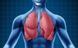 Phát hiện mới có thể khiến sách giáo khoa phải viết lại: Phổi không chỉ giúp chúng ta hô hấp, nó còn tạo máu