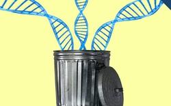 Một củ hành còn có lượng DNA chức năng gấp 5 lần con người, nhưng cũng bởi vậy mà chúng ta tồn tại