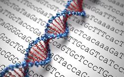 Các nhà khoa học vừa chứng minh có thể chế tạo loại máy tính DNA gần như không có giới hạn về khả năng xử lý