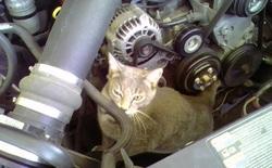 Thợ máy Tesla giải cứu một chú mèo con đáng yêu bị mắc kẹt trong một chiếc Tesla Model X