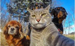Chú mèo này đang gây bão mạng xã hội với bức ảnh selfie của mình và đồng bọn