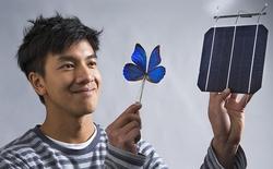 Cấu trúc tế bào quang điện dựa vào cánh của loài bướm xanh mở ra kỷ nguyên mới cho ngành công nghiệp năng lượng mặt trời