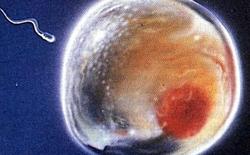 Điều bí ẩn của sinh học: Những tế bào tự trẻ hóa để trở thành bất tử