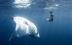 10 bức ảnh cho thấy bạn thực sự nhỏ bé trước đại dương và các sinh vật dưới nước