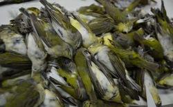 Texas: tòa cao ốc phải tắt đèn ban đêm sau sự vụ gần 400 chú chim bỏ mạng chỉ trong một đêm