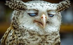 [Vui] Những hành vi bất ngờ và hài hước của động vật hoang dã khi bị chụp ảnh dìm hàng