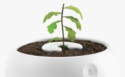 Biến tro cốt người đã khuất thành cây xanh, một phát minh giúp lưu giữ những ký ức quá khứ luôn ở bên
