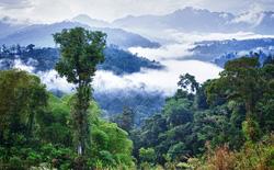 Các loài cây ở Amazon có thể tự tạo mưa cho chính mình trước khi mùa mưa đến