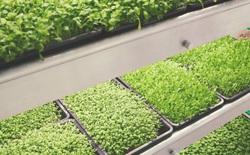 IKEA trình làng trang trại trong nhà, trồng rau nhanh hơn 3 lần so với thông thường