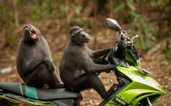 [Ảnh] Những khoảnh khắc hài hước nhất năm của động vật hoang dã trong Comedy Wildlife Photography Awards 2017