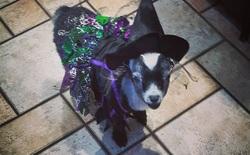 Thú cưng cũng muốn chơi Halloween, và đây là những bộ trang phục đáng yêu nhất bạn từng thấy